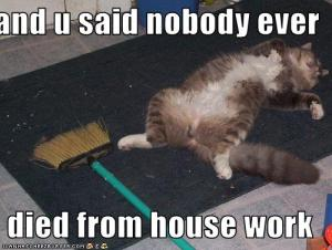 Clean House...dead kitteh