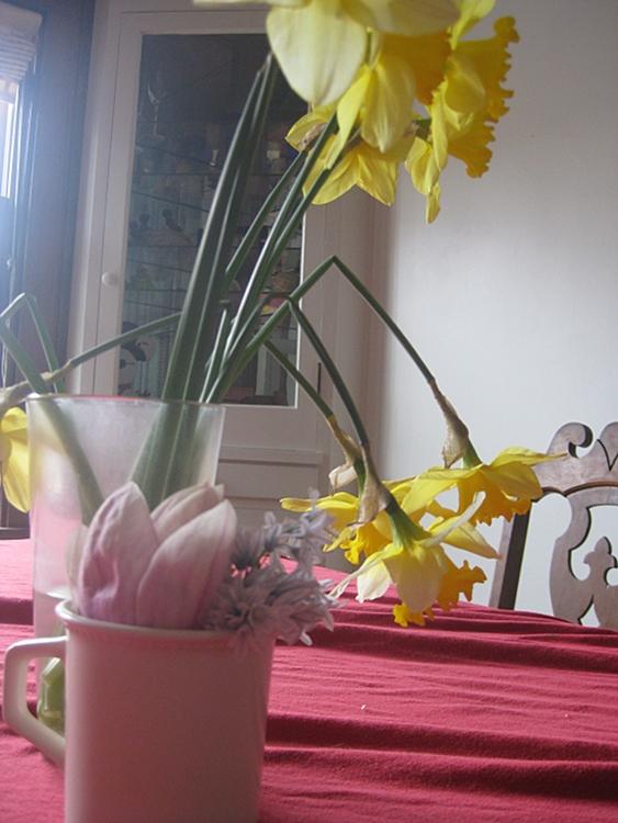 jonquil magnolia scilia