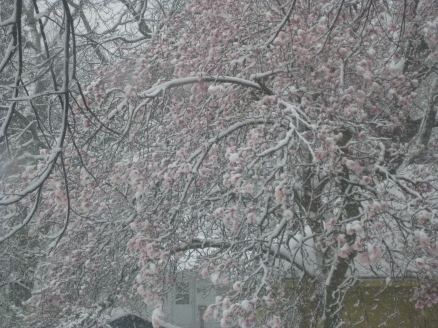 Magnolia blooms in snow - Esscentual Alchemy natural perfume